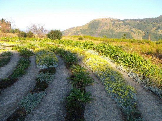 The Edge Mountain Retreat : The Labyrinth @ The Edge, Hogsback