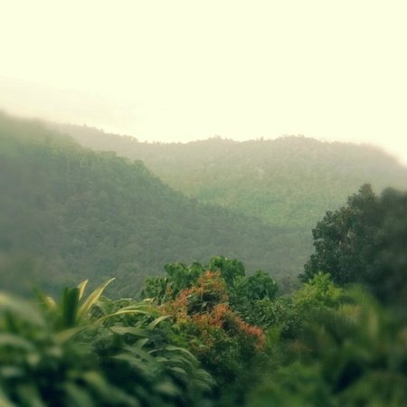 The Dusun: View In the Evening