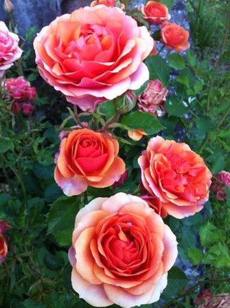 Organic B&B Il Melograno Nano: I colori del giardino