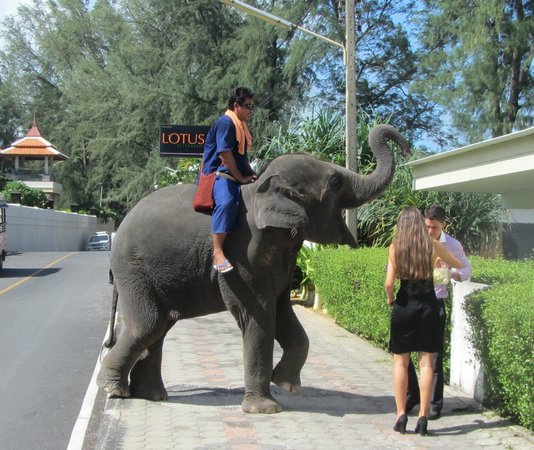 Movenpick Resort Bangtao Beach Phuket: Lucky