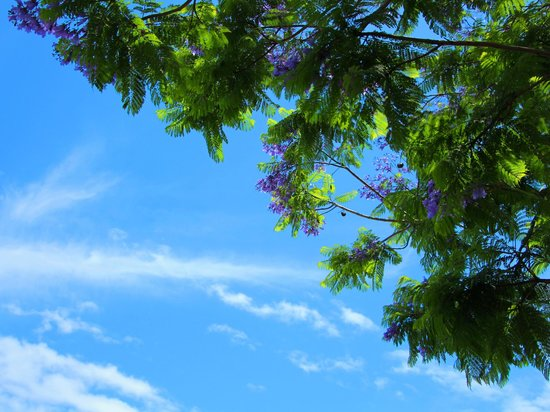 Atami Sun Beach: 薄紫の花と、初夏の空のさわやかな青がよく似合う