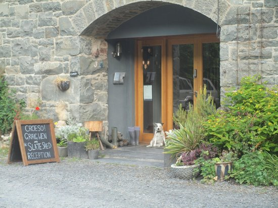 The Slate Shed B &B at Graig Wen: Our welcomer at Reception  on arriving
