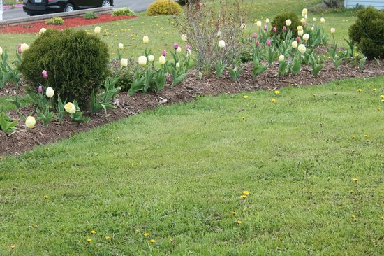 Antigonish Evergreen Inn: The attention to detail continues out to the well-manicured grounds.