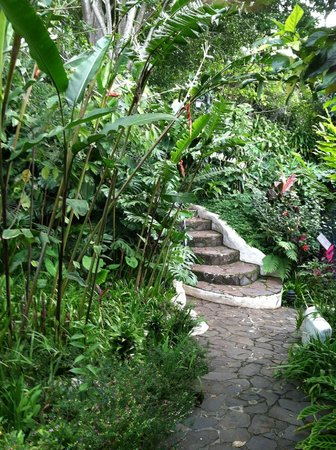 Finca Rosa Blanca Coffee Plantation & Inn: steps to outdoor pool