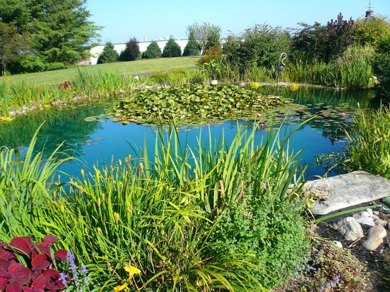 Twin Pine Manor Bed & Breakfast: Garden pond