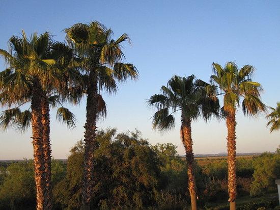 BQ Alcudia Sun Village: het was een fijne vakantie op Mallorca hotel VIVA SUN VILLAGE ALCUDIA een echte aanrader voor me