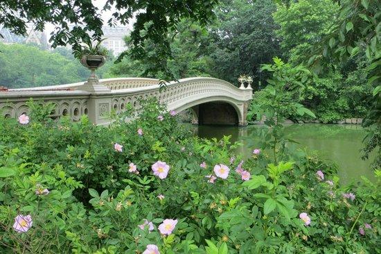 Central Park Pedicab Tours : Central Park is amazing!