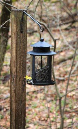 The Inn at Honey Run: Bird feeders