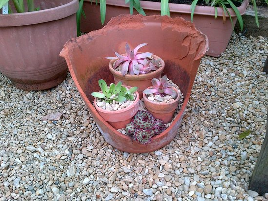 Bridewell Organic Gardens: Interesting idea for a cracked pot in the garden at Bridewell.