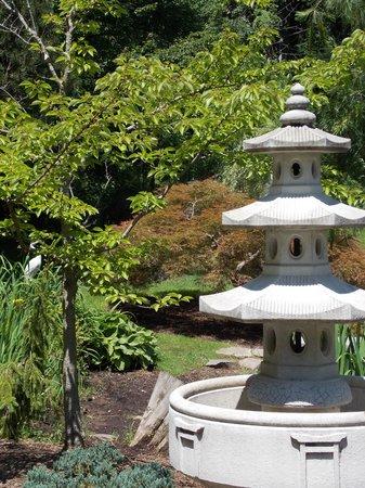 Wickham Park : Lotus garden
