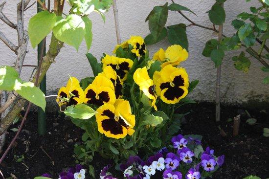Darcy's B&B: garden