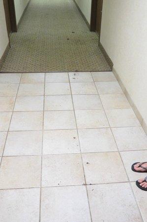 Baymont Inn & Suites Rockford: Mud tracks on hallway of 4th floor