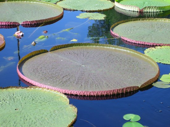 The International Water Lily Garden @ Civic League Park