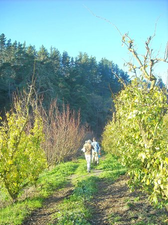 Wildekrans Country House: Our hike through the orchard