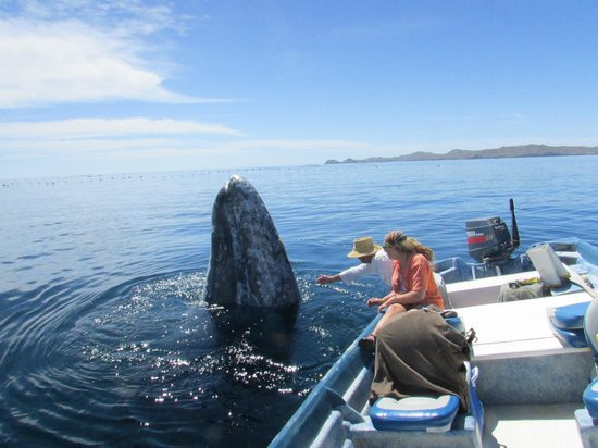 Magdalena Bay Whales: Whale Takes a Closer Look ...   Wow