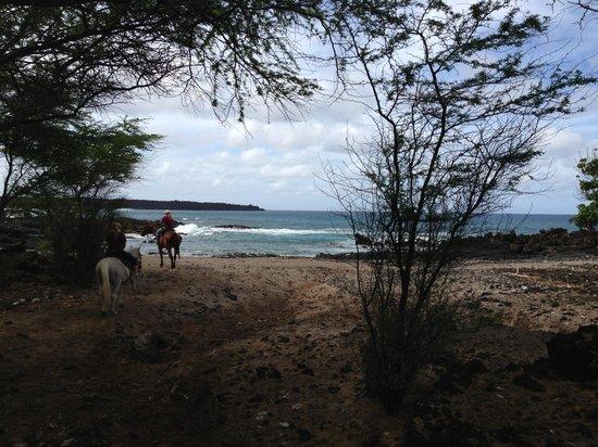 Makena Stables : Ocean trail