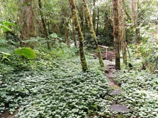 Quetzal Trail: Variegated ground cover