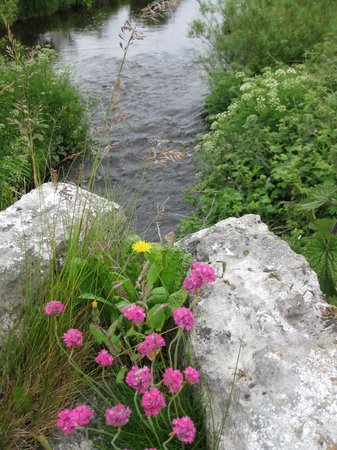 Aille River Hostel: the creek