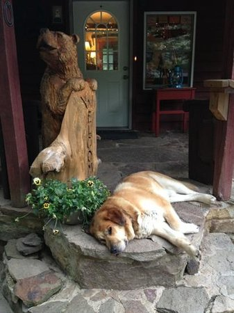 Stepping Stone Farm Bed and Breakfast: This is Harvey the dog.  He and I became really good friends.