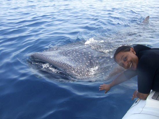 Holbox Hotel Mawimbi: Mawimbi's whale shark tour from Holbox Island