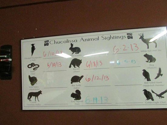 The C.H. Nash Museum at Chucalissa: boarding to list sightings of animals that are in the area
