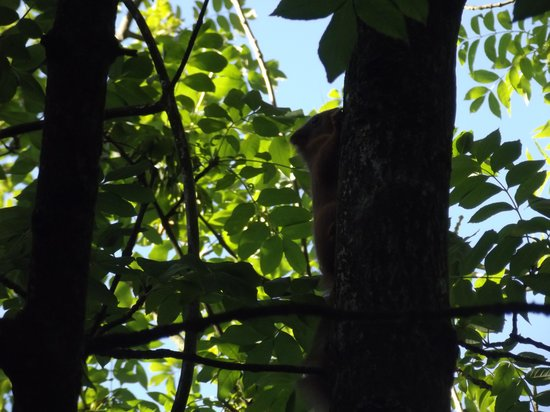 Lisco Farm Bed & Breakfast: A red squirrel in a nearby tree