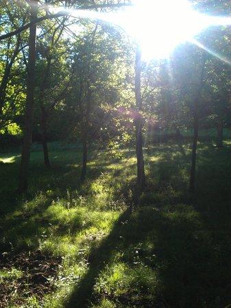 Sunlight in the Green Horizons garden