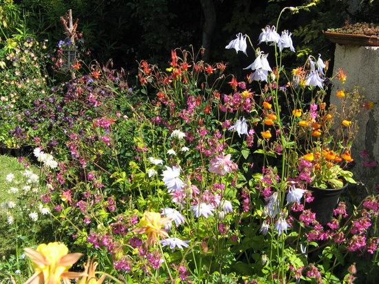 Touchwood Aquilegia Garden