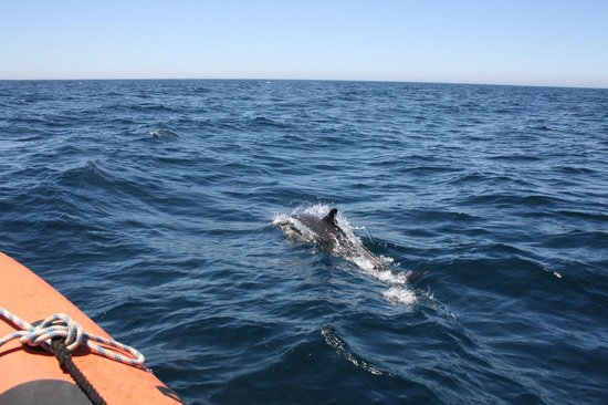 Mar Ilimitado : Bottlenose dolphin close to the boat