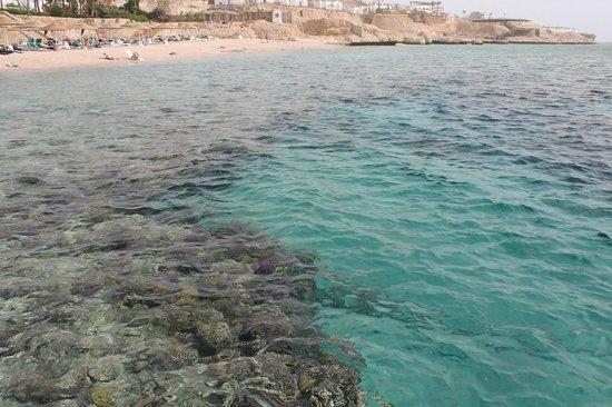 Domina Coral Bay Oasis: Чудное море