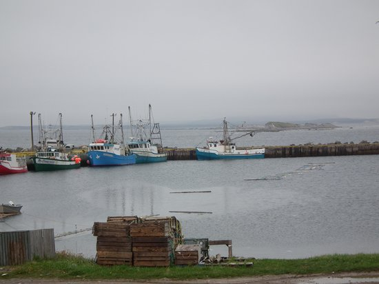 Shallow Bay Motel & Cabins : The fishing fleet in Shallow Bay.