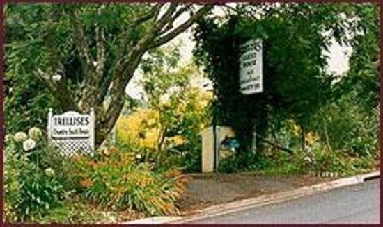 Trellises Guest House: Driveway