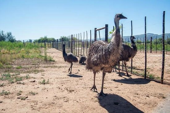 Safari Ostrich Show Farm : They also have Emus