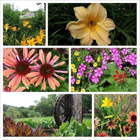 Ridges Resort & Marina : Summer flowers are in bloom!