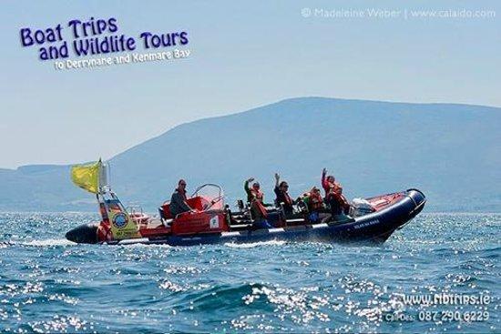 Caherdaniel, Irlanda: Ribtrips to Derryane and Kenmare Bay with Des on board the MC lolar na Mara