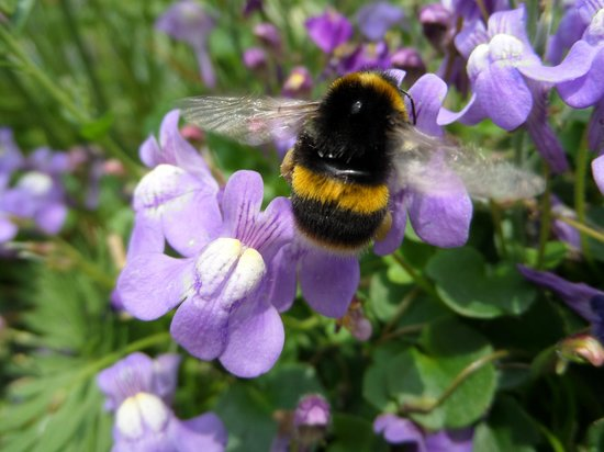 Allerdale House Keswick: Bees working hard in our garden