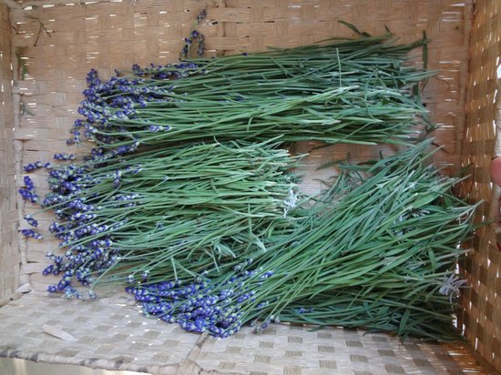 Fort Hill Farms : lavender ready for drying