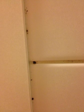 Hotel Lautrup Park: detalje dusj