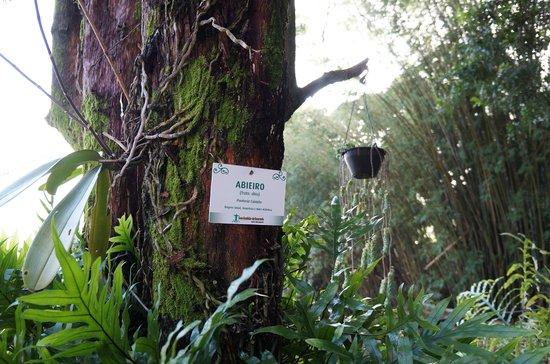 Casa Caminho do Corcovado: Trees cataloged
