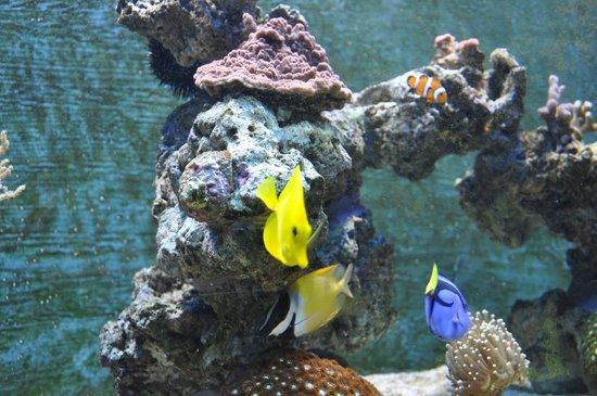 Algunos Peces Fotograf A De Aquarium Sea Life Benalm Dena