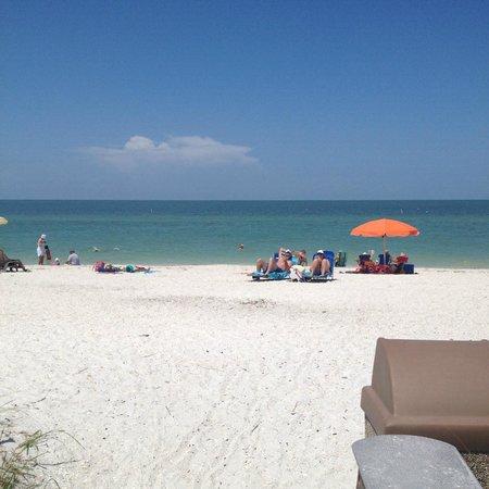 Dog Beach : Bonita Beach