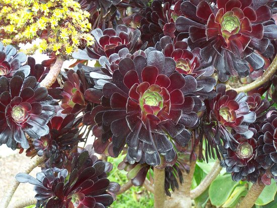 Mendocino Coast Botanical Gardens: One of my favorites