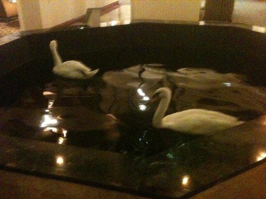 Embassy Suites by Hilton Austin Arboretum : Butch  and Sundance. Royal Swans