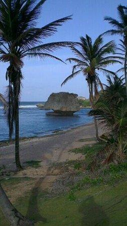 The famous rock on Bathsheba Beach