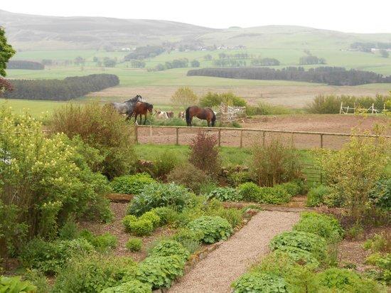"Weston Farm Dunsyre: The ""backyard"""