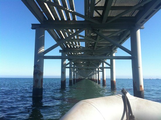 Seaweed Express: Zooming under the pier