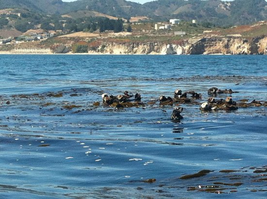 Seaweed Express: Sea otter town