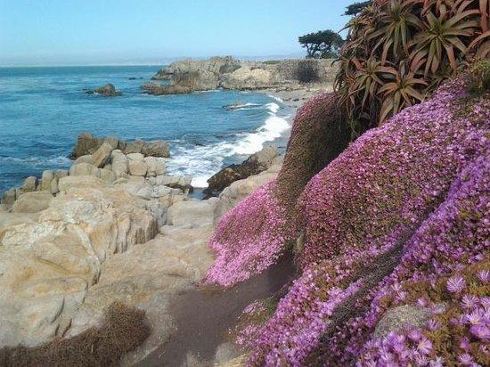 Monterey Peninsula Recreational Trail: near lovers point, Photo by Douglas Carroll June 2013