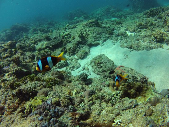 Blue vision dive center nosy be all you need to know before you go with photos tripadvisor - Dive center blu ...