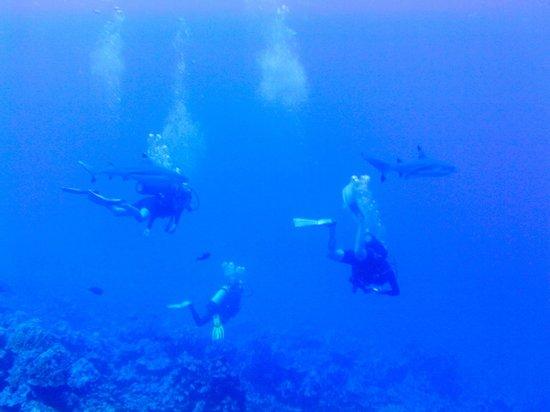 Tahaa Diving : Divers